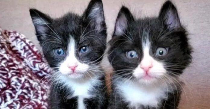 jones shiro salvataggio gatti appena nati