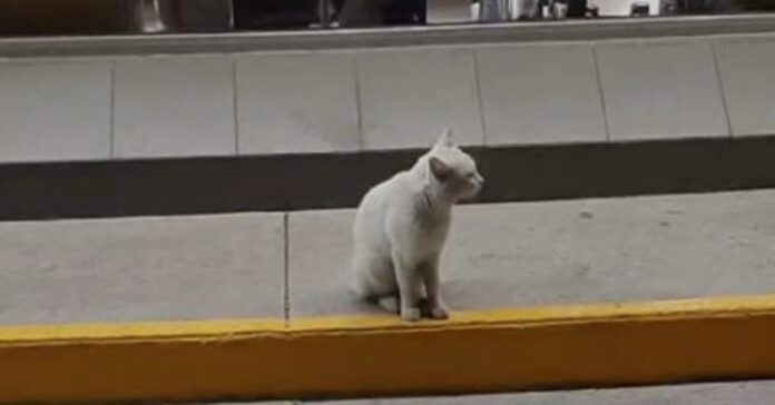 rabbit gattino video