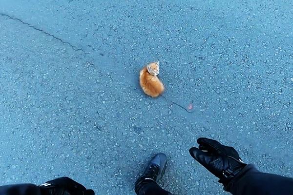 seta gattino video