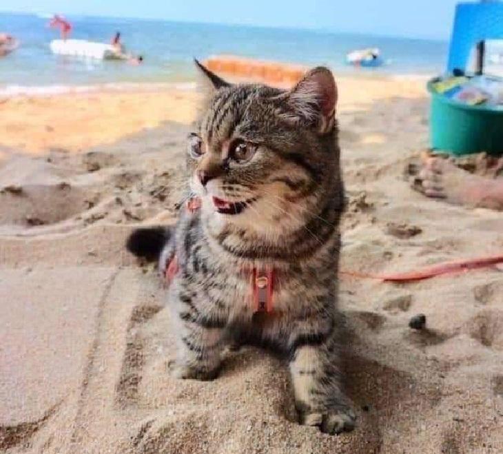 spiaggia-gattino-divertimento