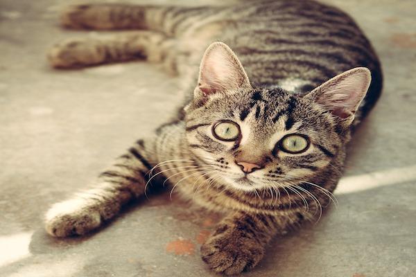 Prendersi cura di un gatto e del suo benessere