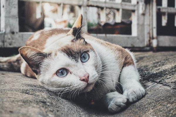 Alitosi del gatto, quali sono le principali cause?