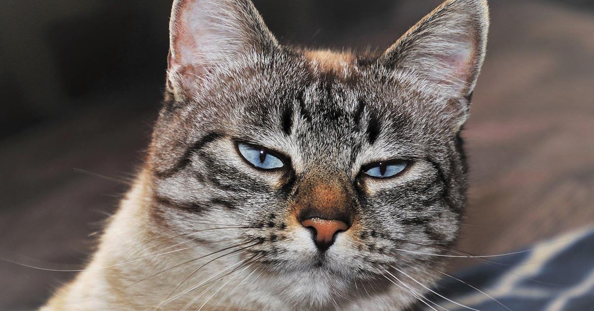 gatto a contatto con alcol