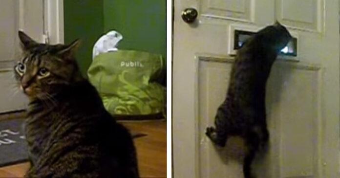 Gatto postino