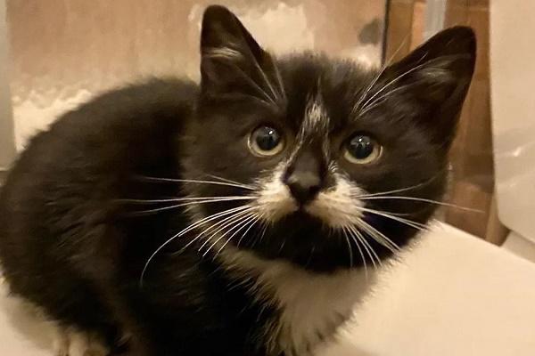 carl gattino fiv