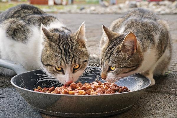 conservare cibo gatti