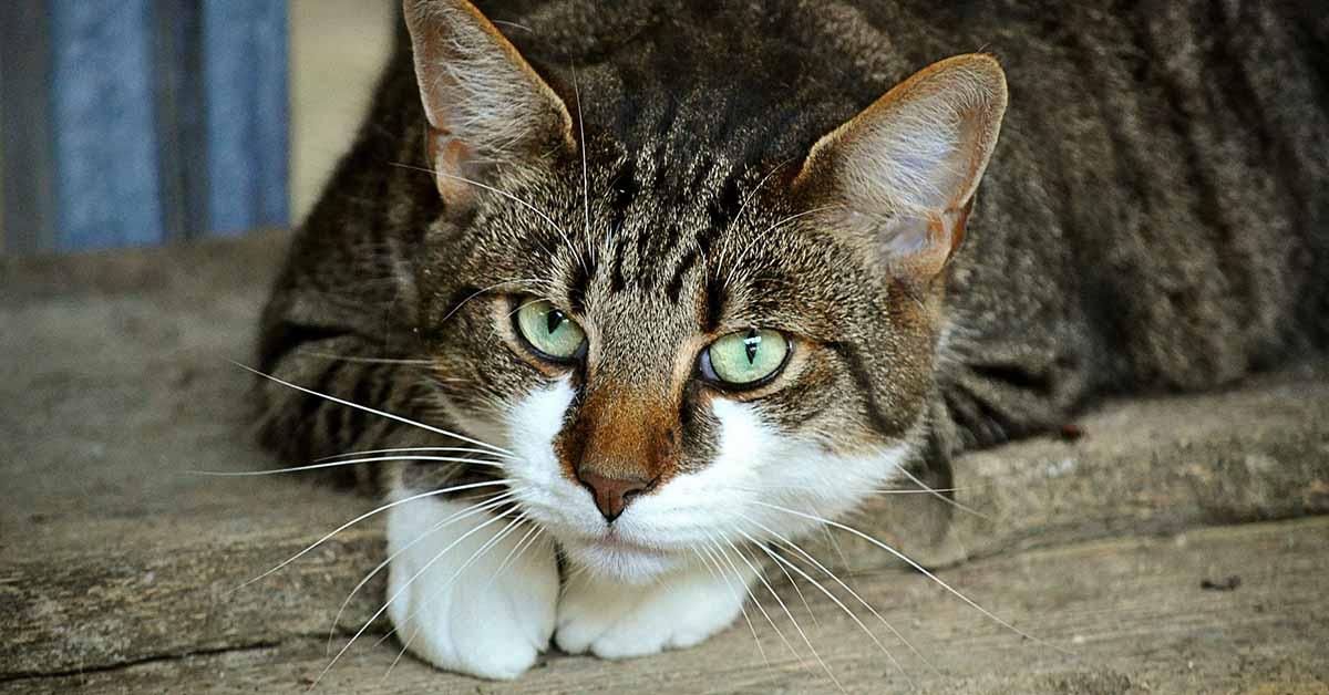 pulire lettiera del gatto