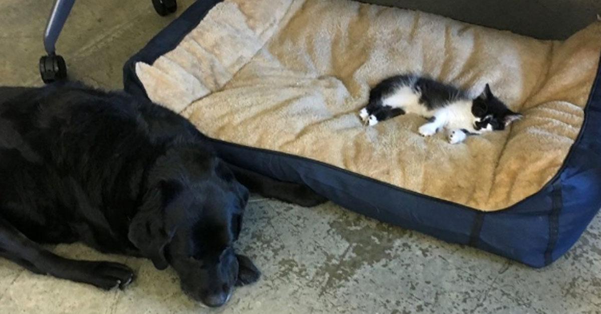 Gattino che dorme con cane