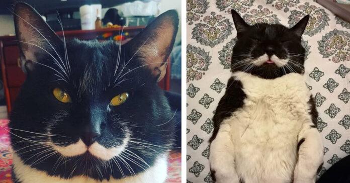 Gattino Dalì