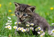Gattino fiori
