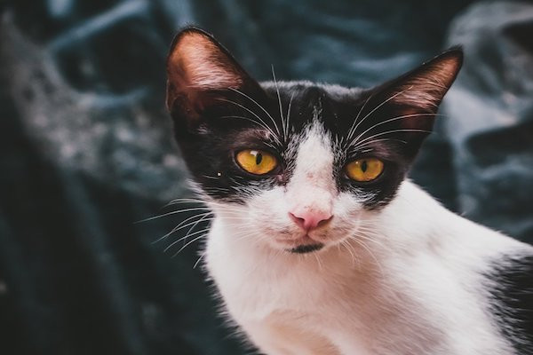 gatto che guarda