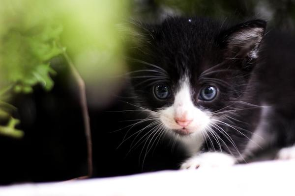 controindicazioni feromoni gatti