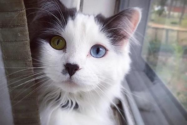 fluffy gattino randagio