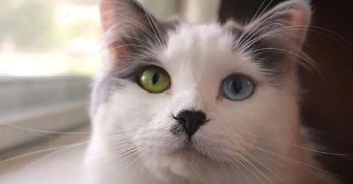 fluffy gattino randagio video