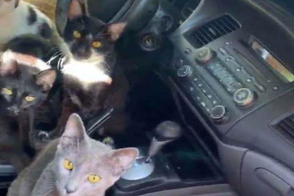 gattini automobile video