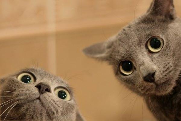 gattini piccoli foto