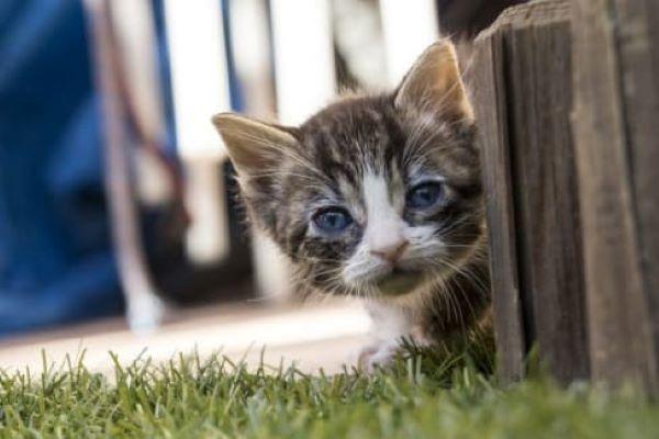 gattino cuorioso