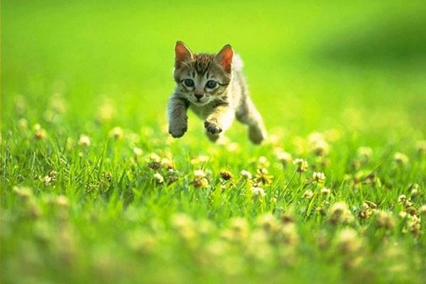 gattino corre
