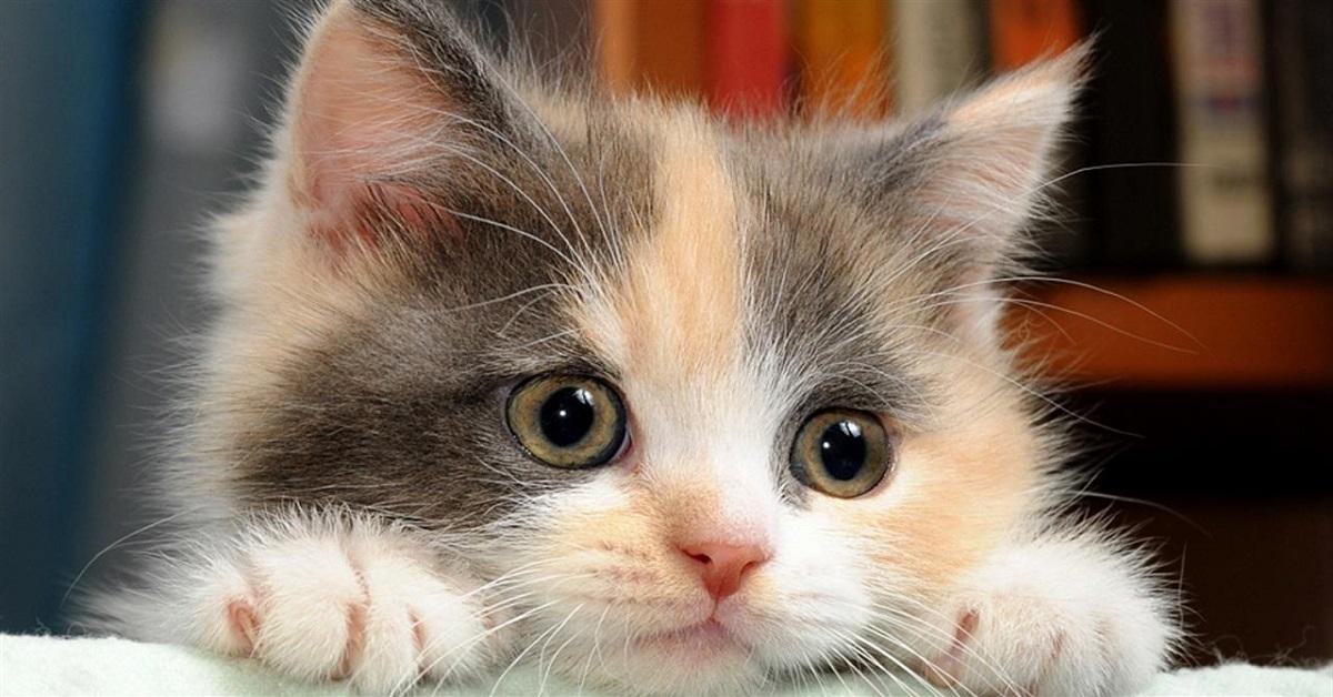 Amato Gattini piccoli, 30 foto dolcissime per innamorarsi dei micini ZS33