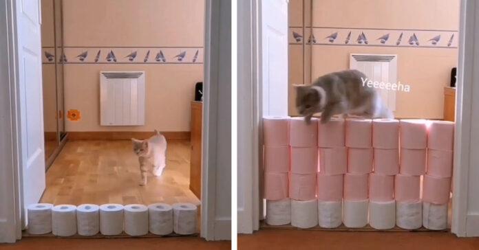 Gattino salta rotoli di carta igienica