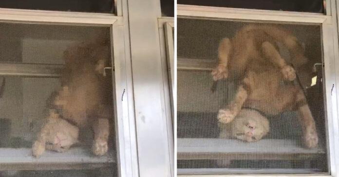 Gatto tenta la fuga