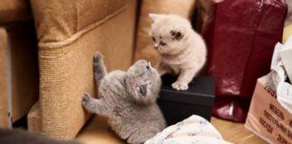 gattino che graffia