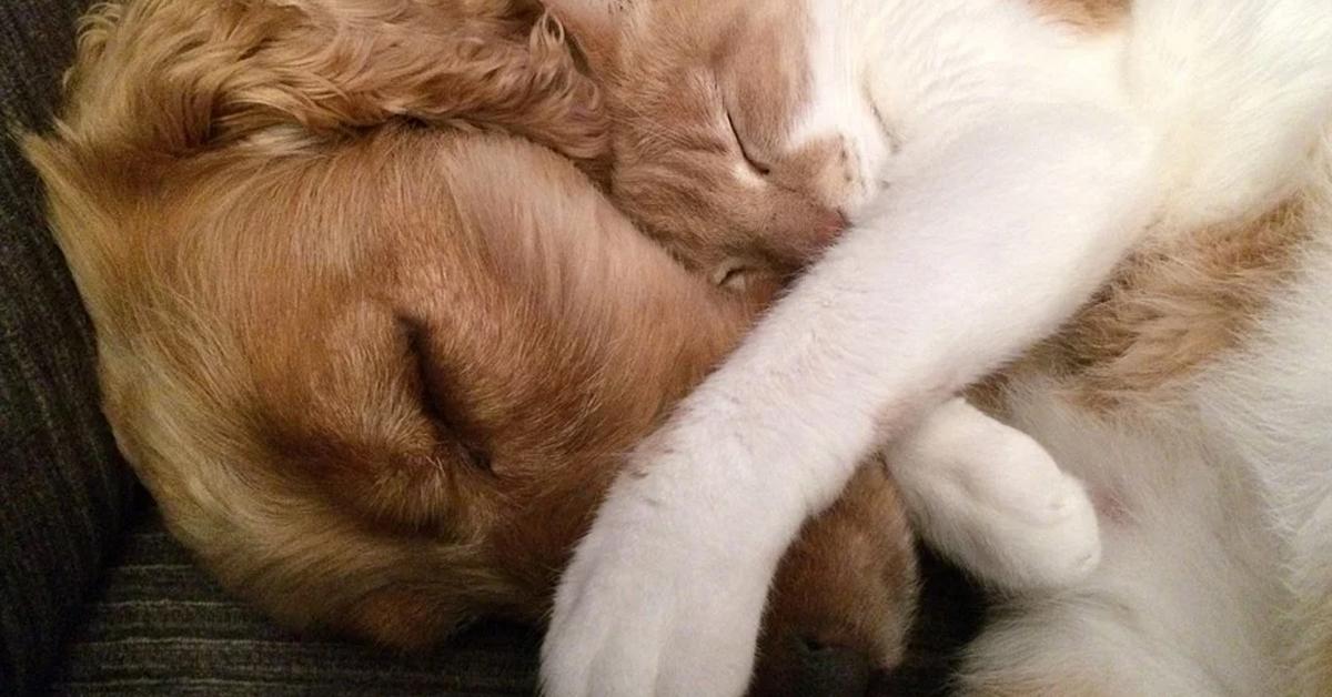 Gatto che dorme con cane
