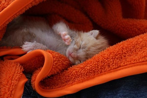 Gattino non fa pipì