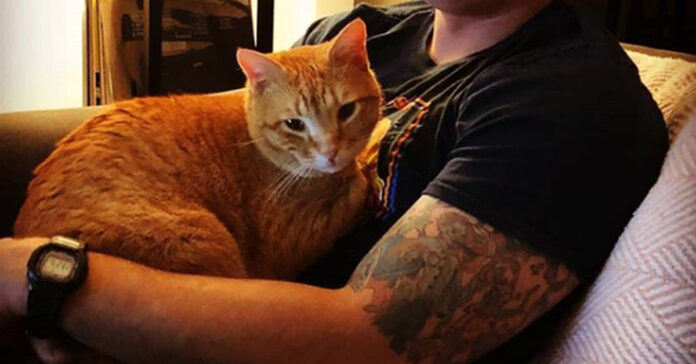 Gatto con proprietario