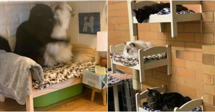 gatti nei letti