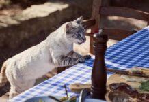 gatto vuole sardine