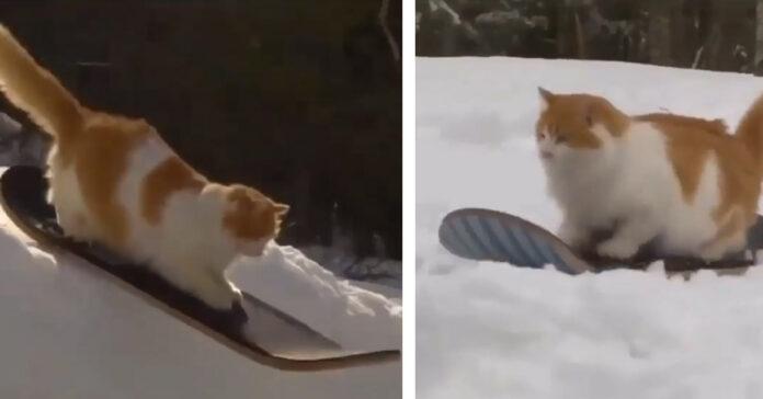 Gattino su uno skateboard