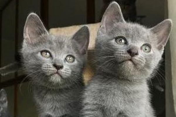 jones gattino fratellino