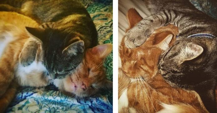 Due gattini che dormono insieme