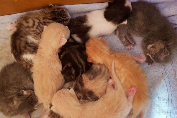 gattini allattati dalla mamma