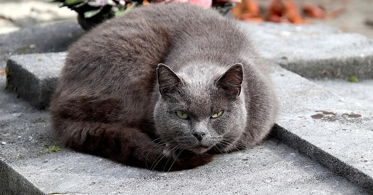 Gatto che punta