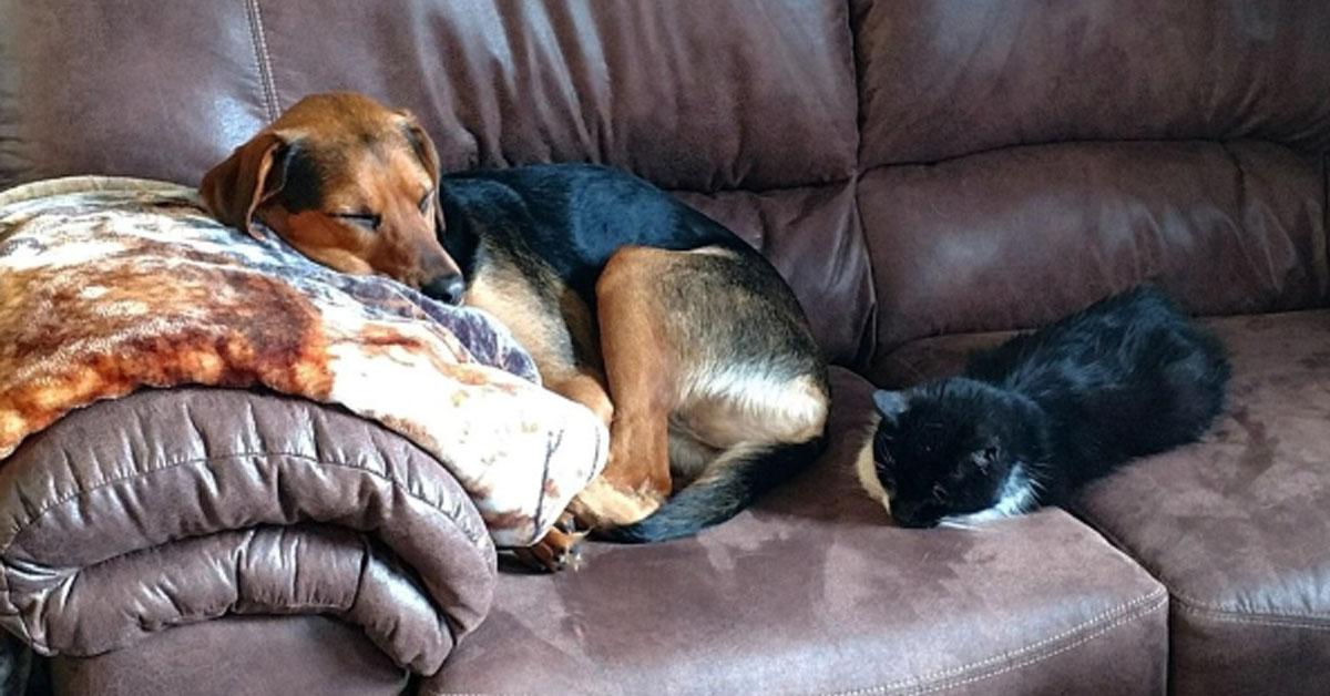 Gatto che dorme con un cane