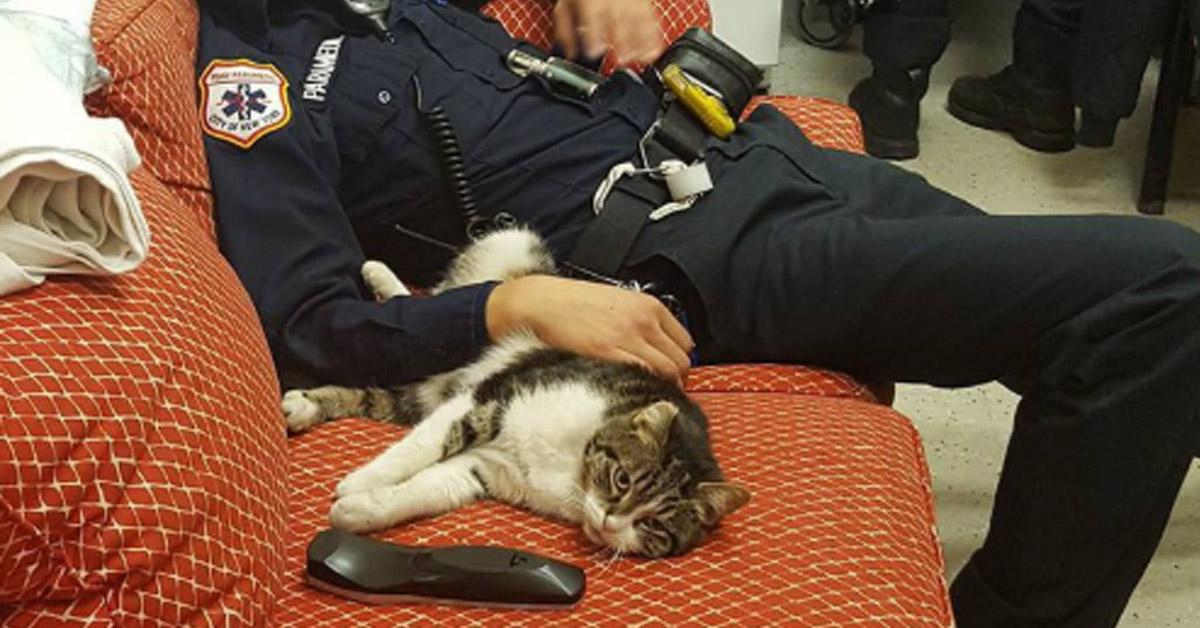 Gatto con un pompiere