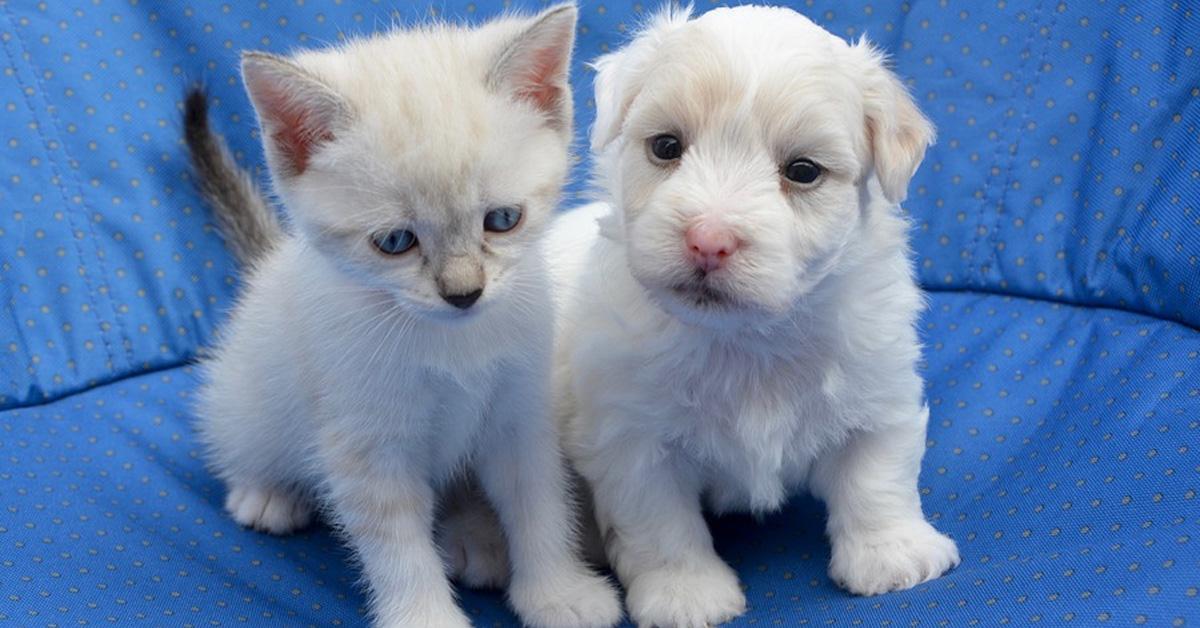 Gattino con un cagnolino