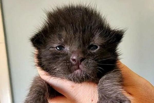 ramona gattino