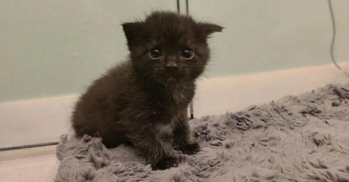ramona gattino salvato video