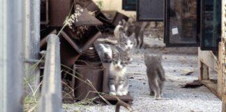 rocky gattino zona industriale