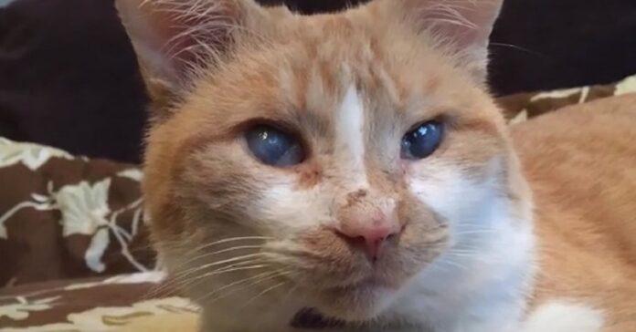 rufus gatto cieco video
