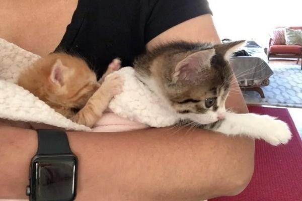 sunshine cheddar gattini video