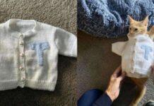 gatto con un maglione