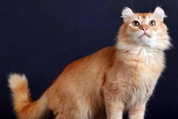 gatto con il mantello rosso