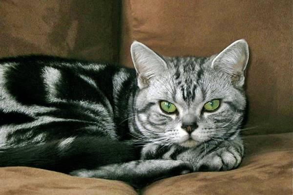 gatto non vuole essere disturbato mentre riposa