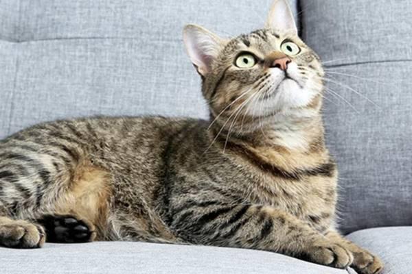 gatto con il muso dolce