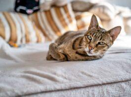 un gatto che dorme sul letto