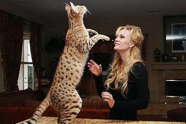 ashera gioca con la sua padrona
